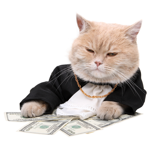 Cats With Cash