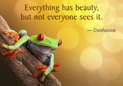 confucius-beauty