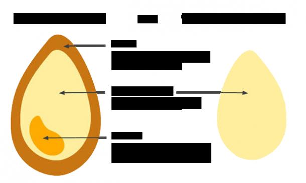 whole-grains-explained