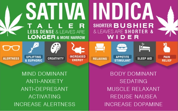 cannabis-infographic